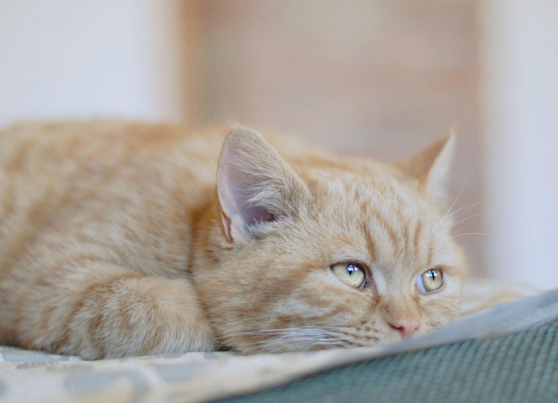 Рвет пеной кошку при хпн