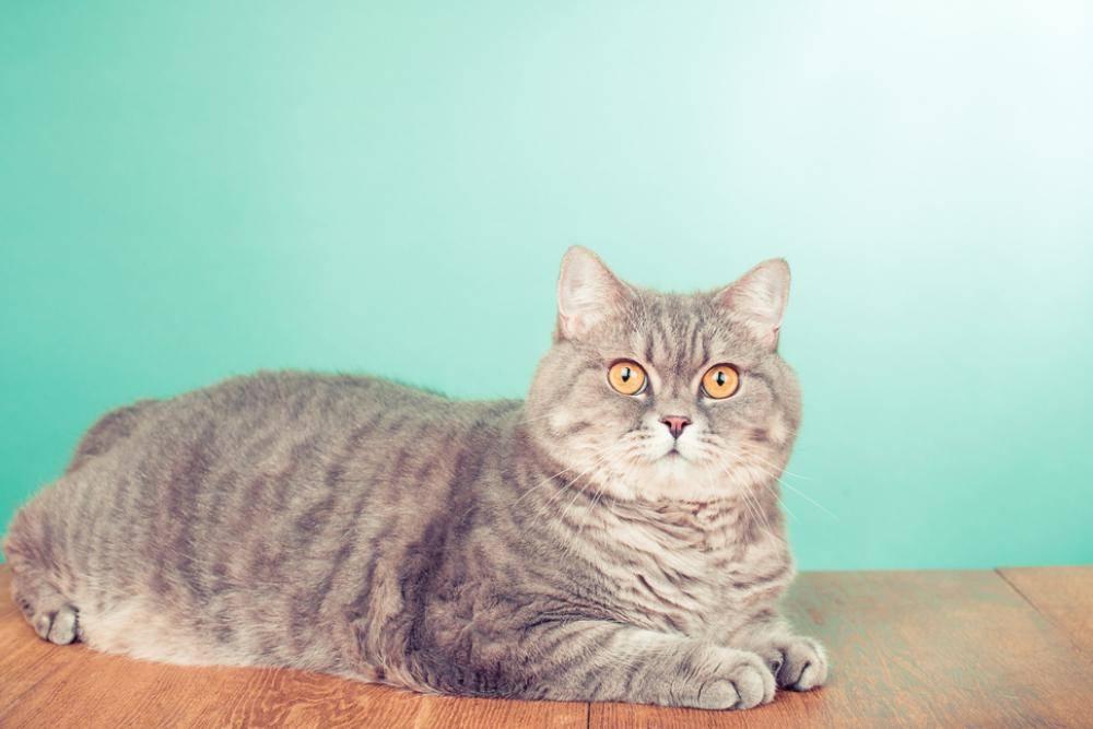 Кошку рвет белой пеной