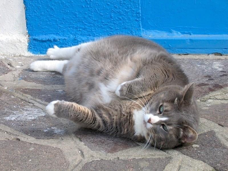 Если беременную кошку рвет желтой жидкостью, то это очень опасно