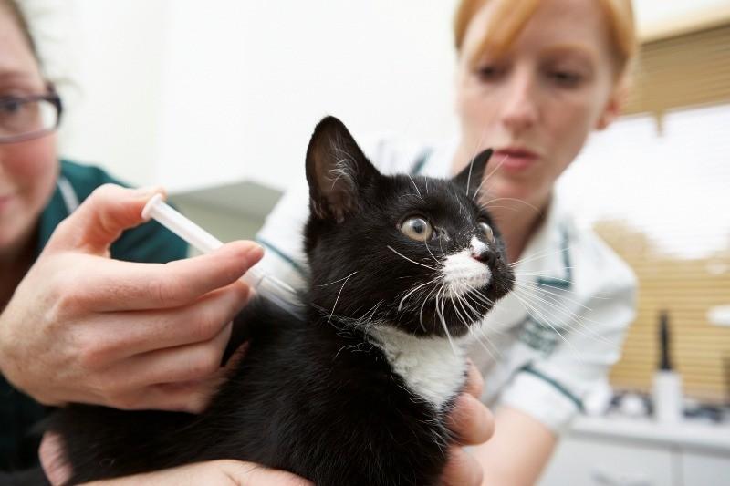 Чтобы животное не болело, нужно проводить своевременную вакцинацию