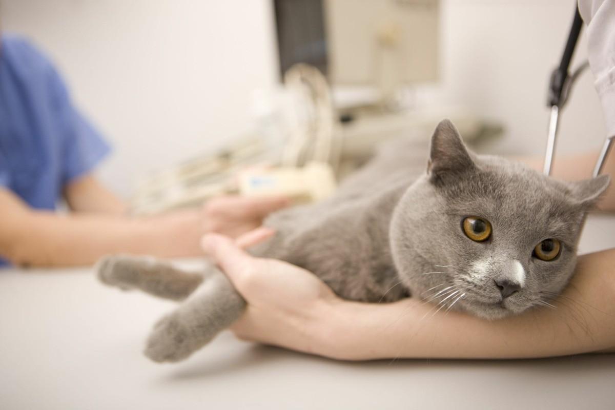 Только ветеринар сможет провести полное обследование животного и установить причину недуга