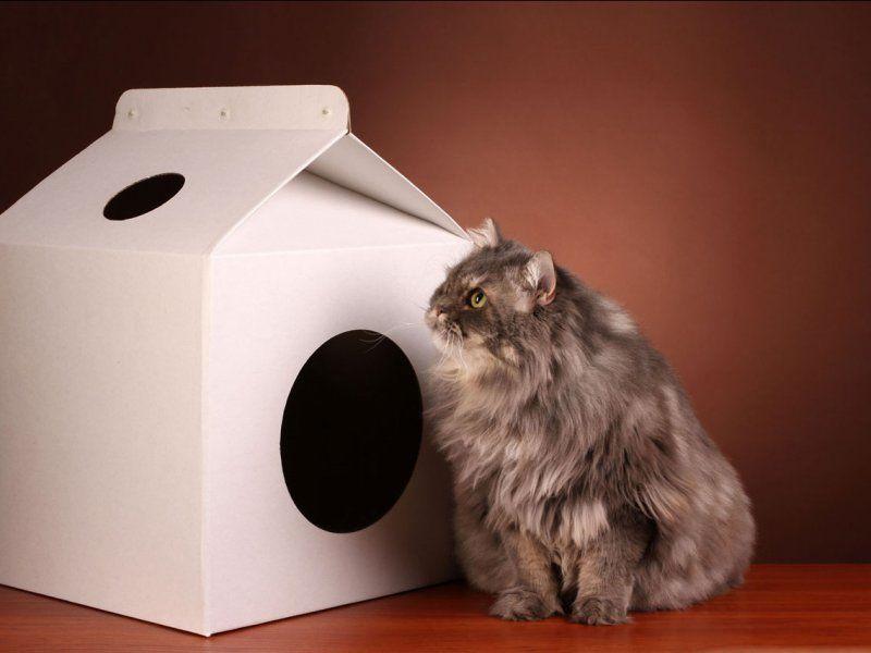 Из картонной коробки можно сделать уютный домик для кота