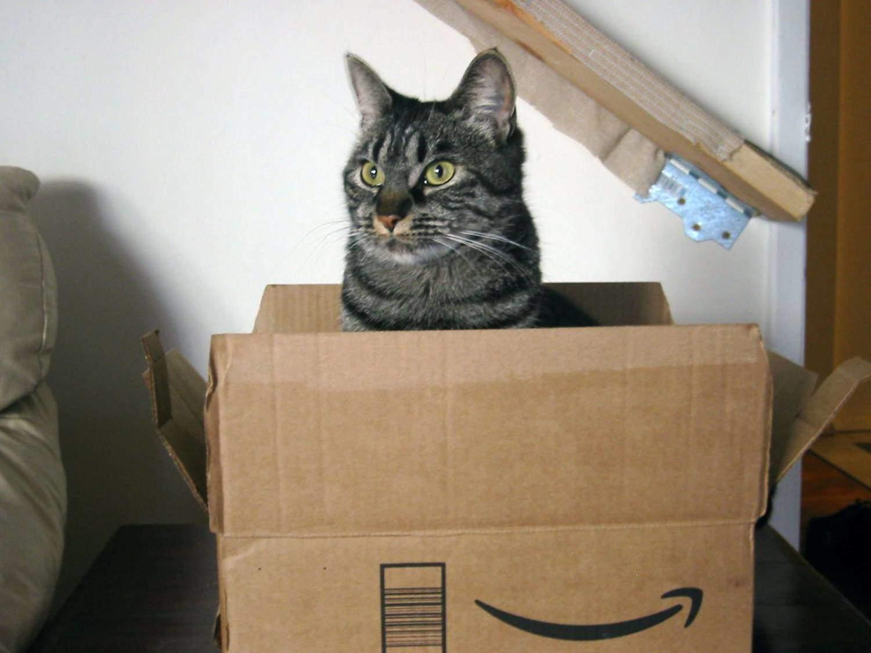 Кот прячется в коробке