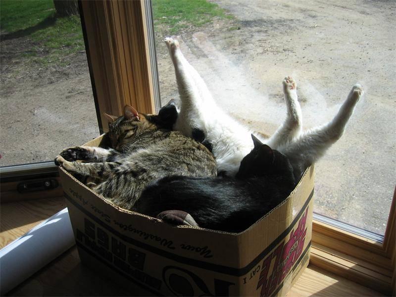 Коробка - убежище для котов