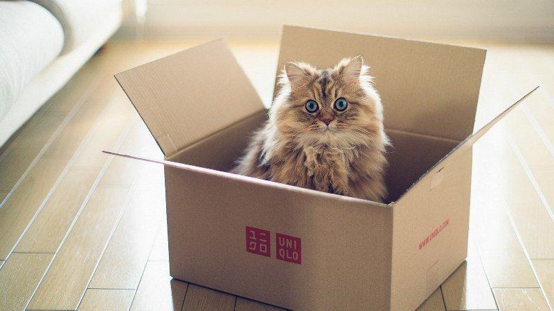 Кошки чувствуют себя спокойнее в коробке