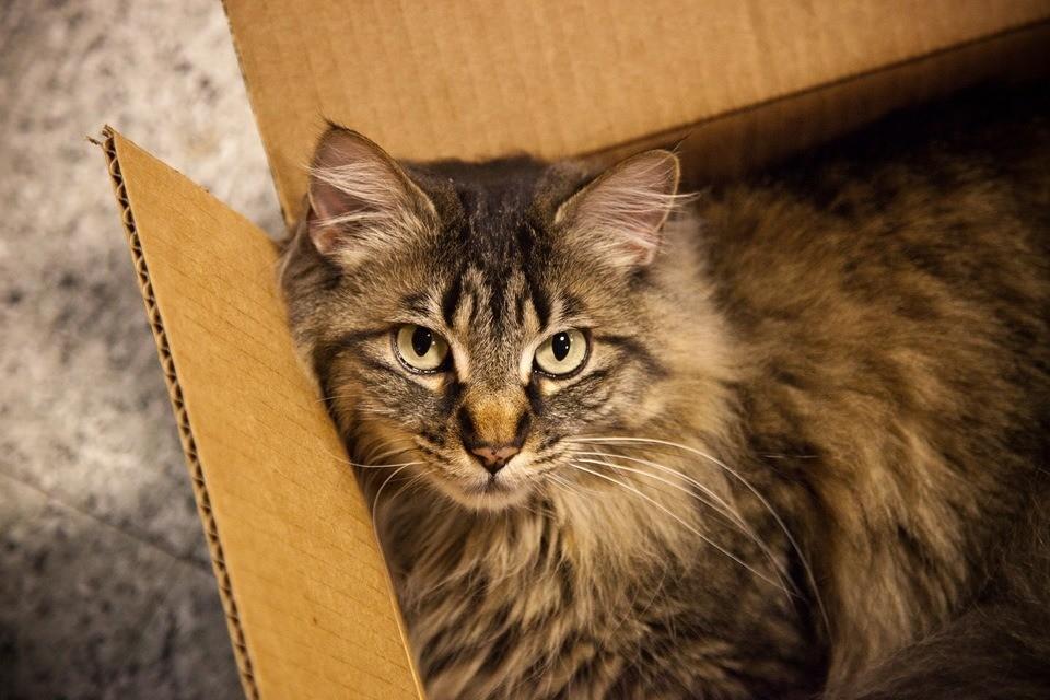 Только в коробке кошки становятся самими собой