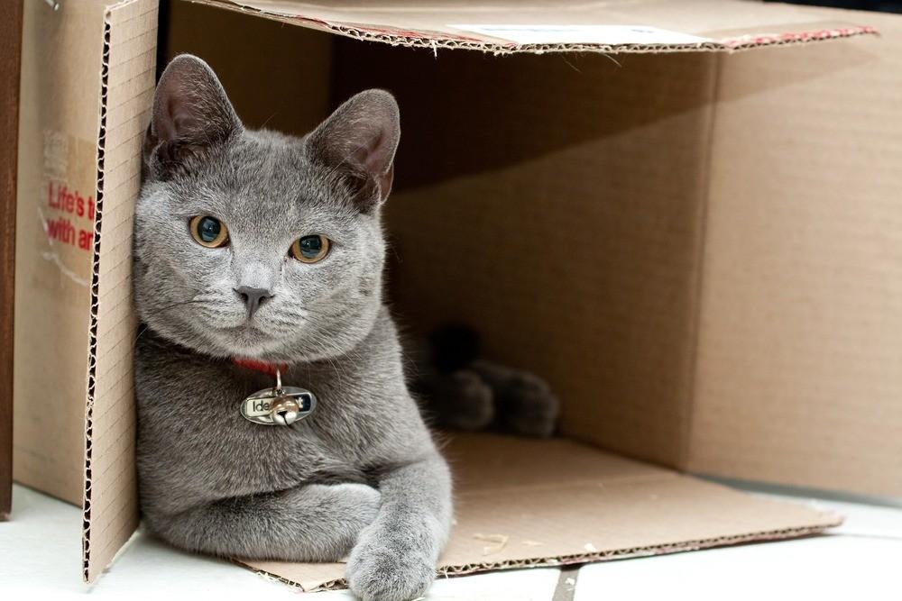 Коты стремятся залезть в картонные коробочки, чтобы согреться