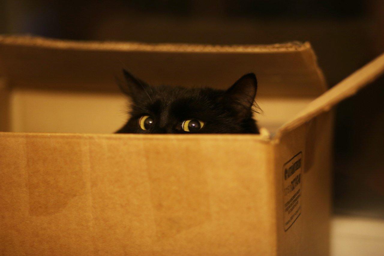Коты удовлетворяют свою потребность в охоте благодаря коробке