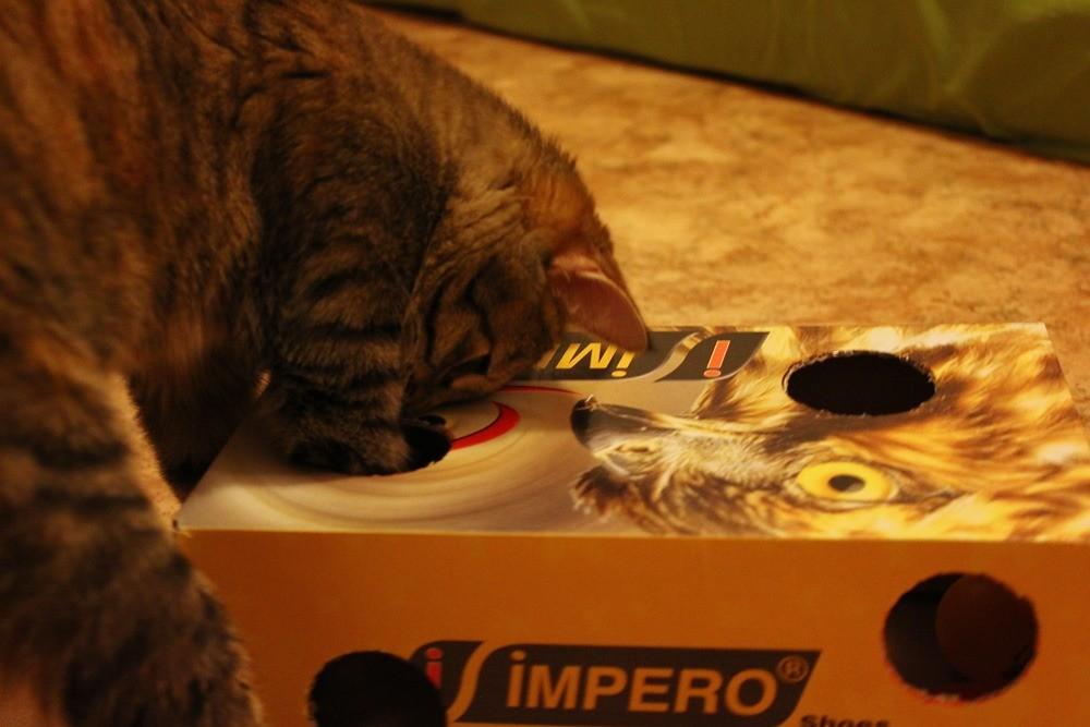 Можно сделать дырки в коробке и положить игрушки внутрь