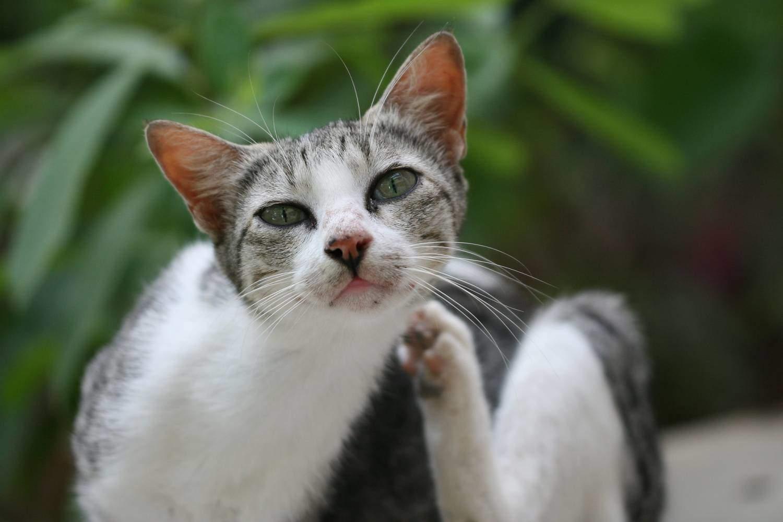 Необходимо осматривать кошку регулярно после прогулки