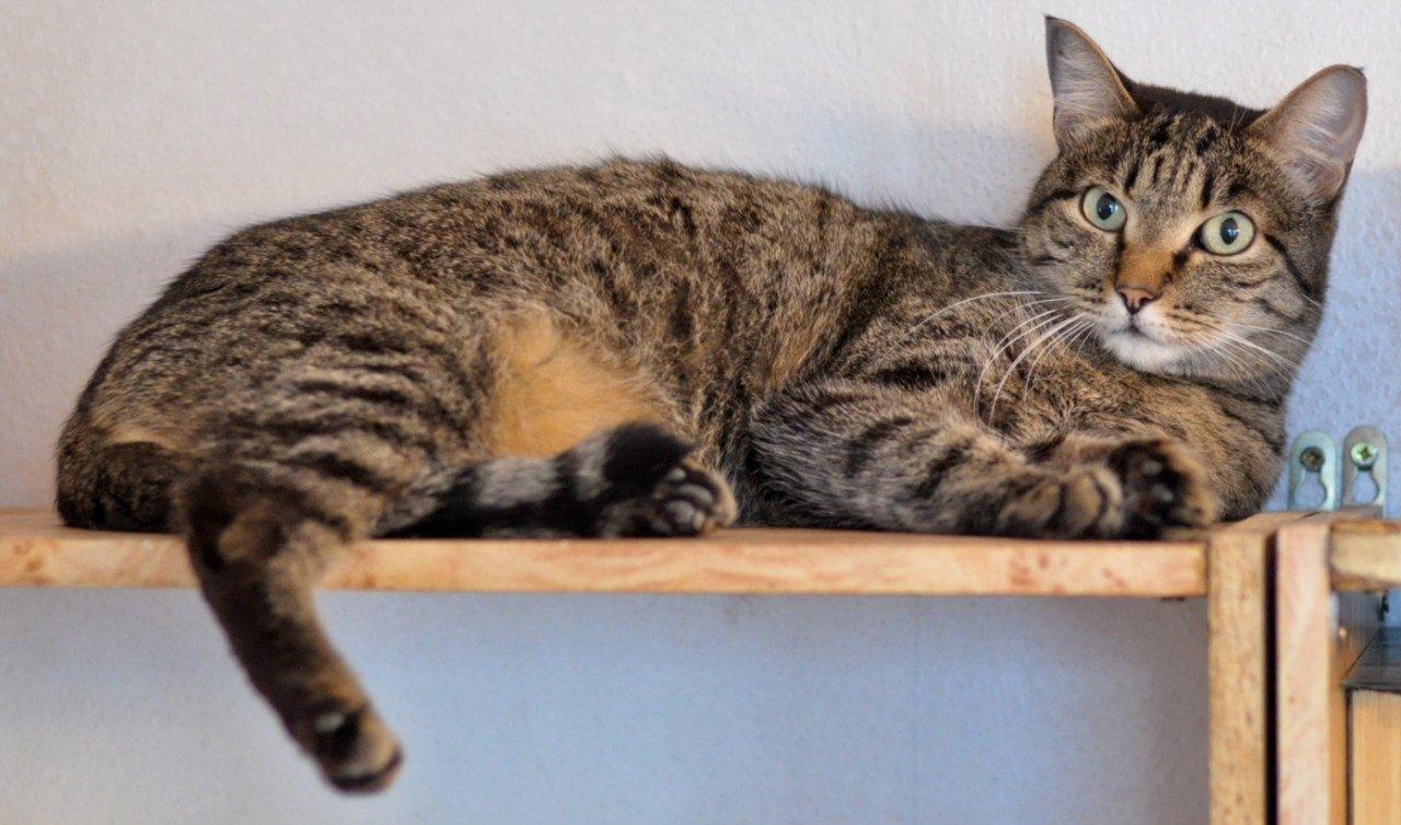 Если кошка стала вялой, возможно к ней присосался клещ