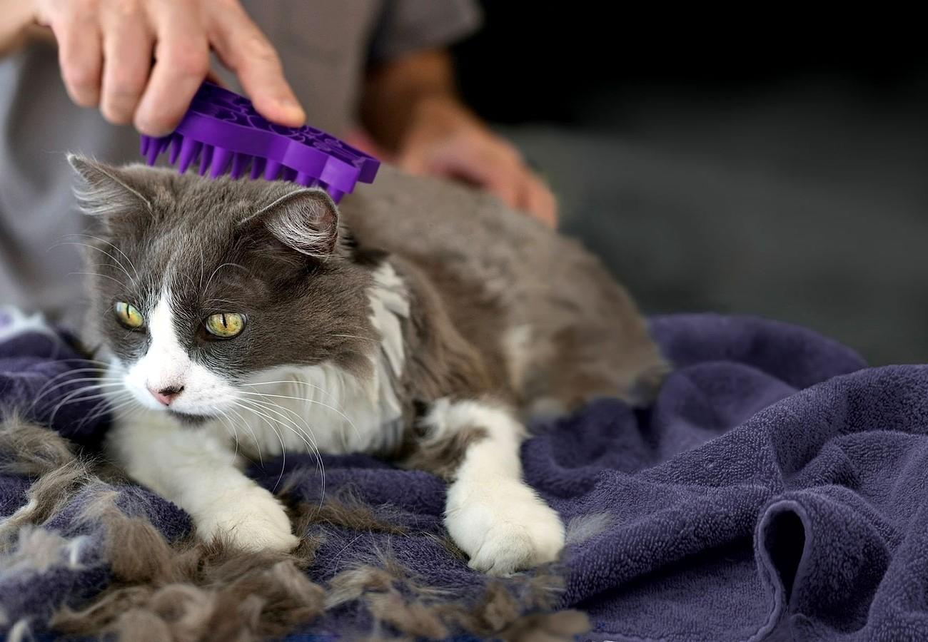 Коты линяют при нехватке витаминов или аллергии на корм