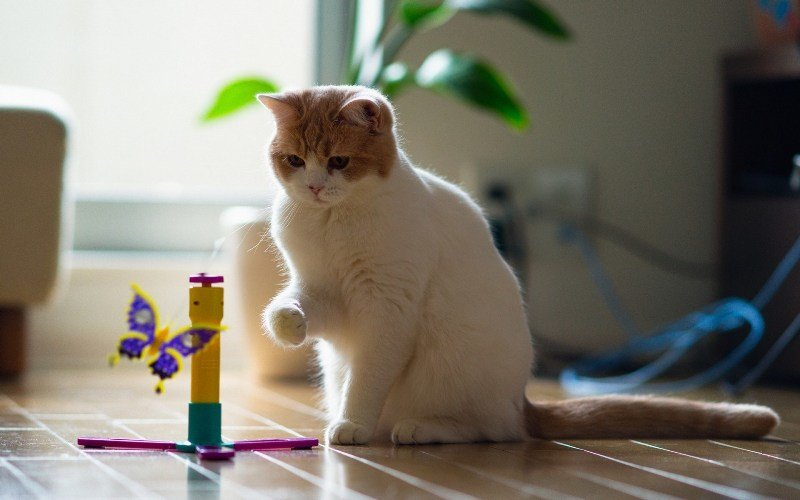 Чтобы снизить психологическое напряжение у кошки, следует поиграть с ней