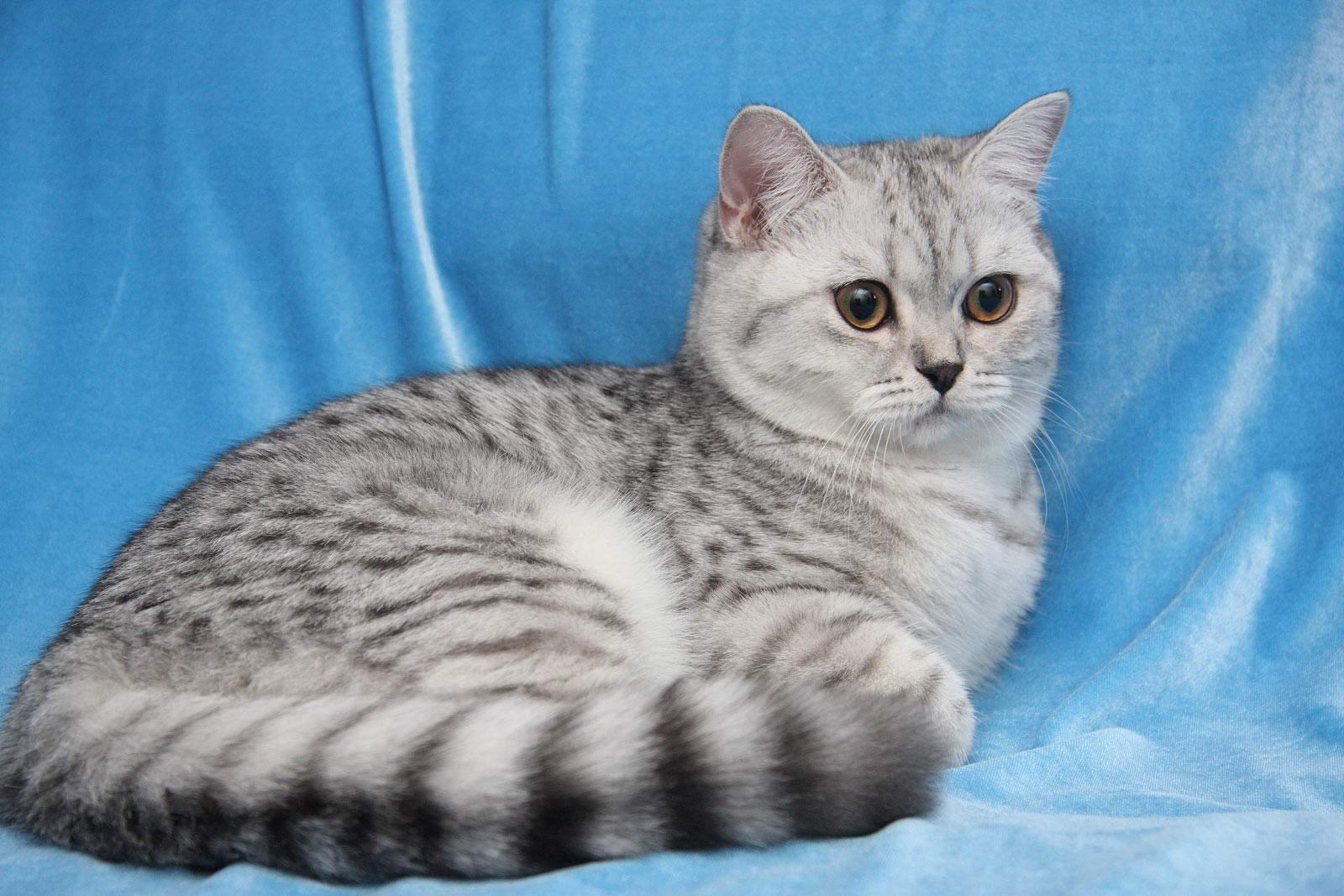 При первых признаках течки у кошки ее необходимо изолировать в отдельное помещение