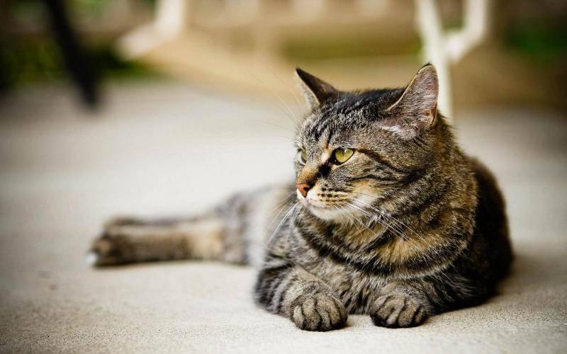 Мочекаменной болезни больше подвержены коты, нежели кошки