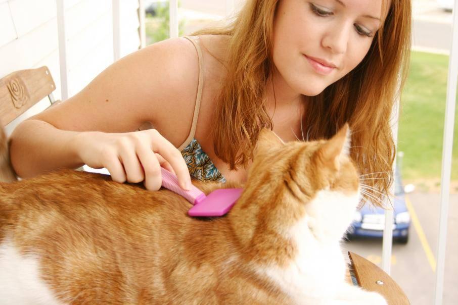 Выпадение шерсти у котов и кошек происходит весной и осенью