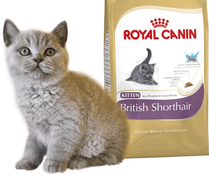 Корм Royal Canine одобрен ветеринарами