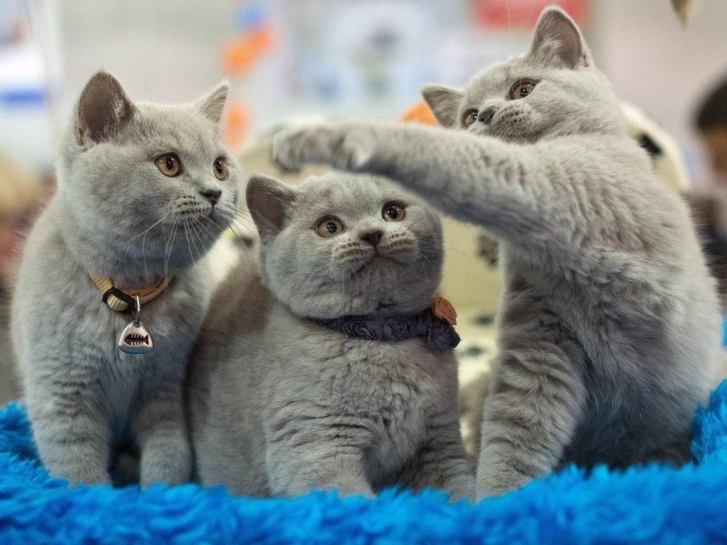 Для котят младше 3 месяцев можно использовать только препараты короткого действия