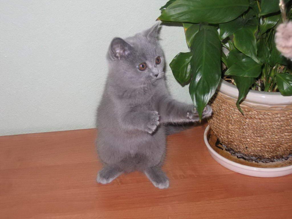 Котенку надо дать время привыкнуть к новому дому