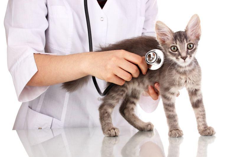 Важно вовремя обращаться к ветеринару для оказания медицинской помощи домашнему любимцу
