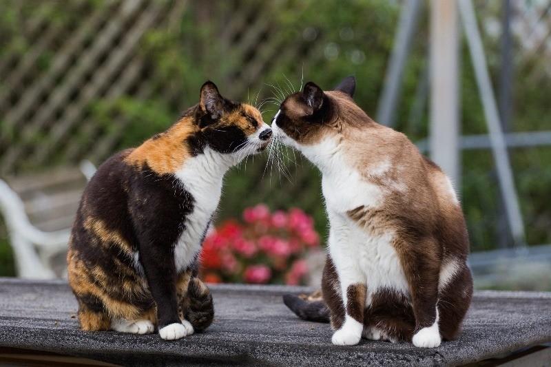 Опаснее всего прямой контакт с больным животным или носителем