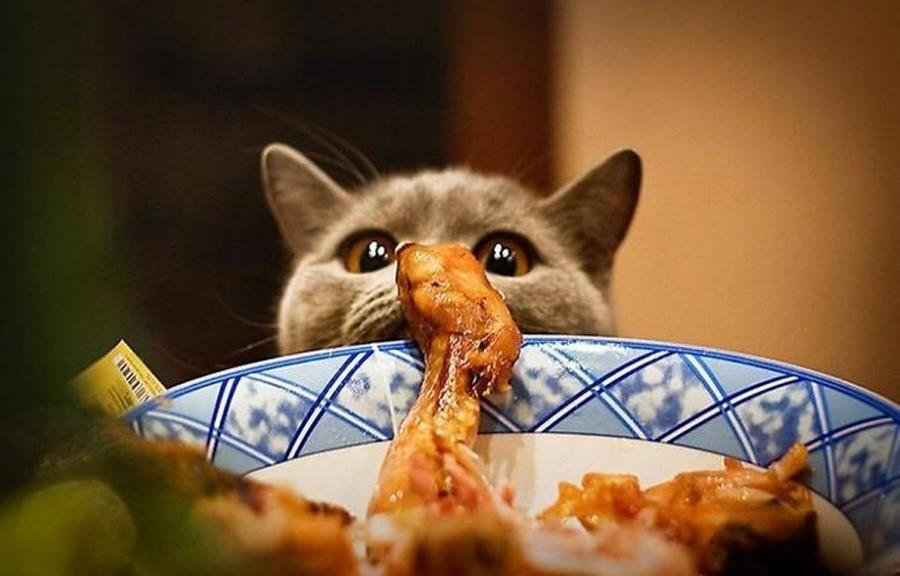 После перевода питомца на сухое кормление не следует подкармливать его продуктами со стола