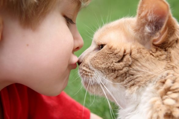 Мальчик и кошка