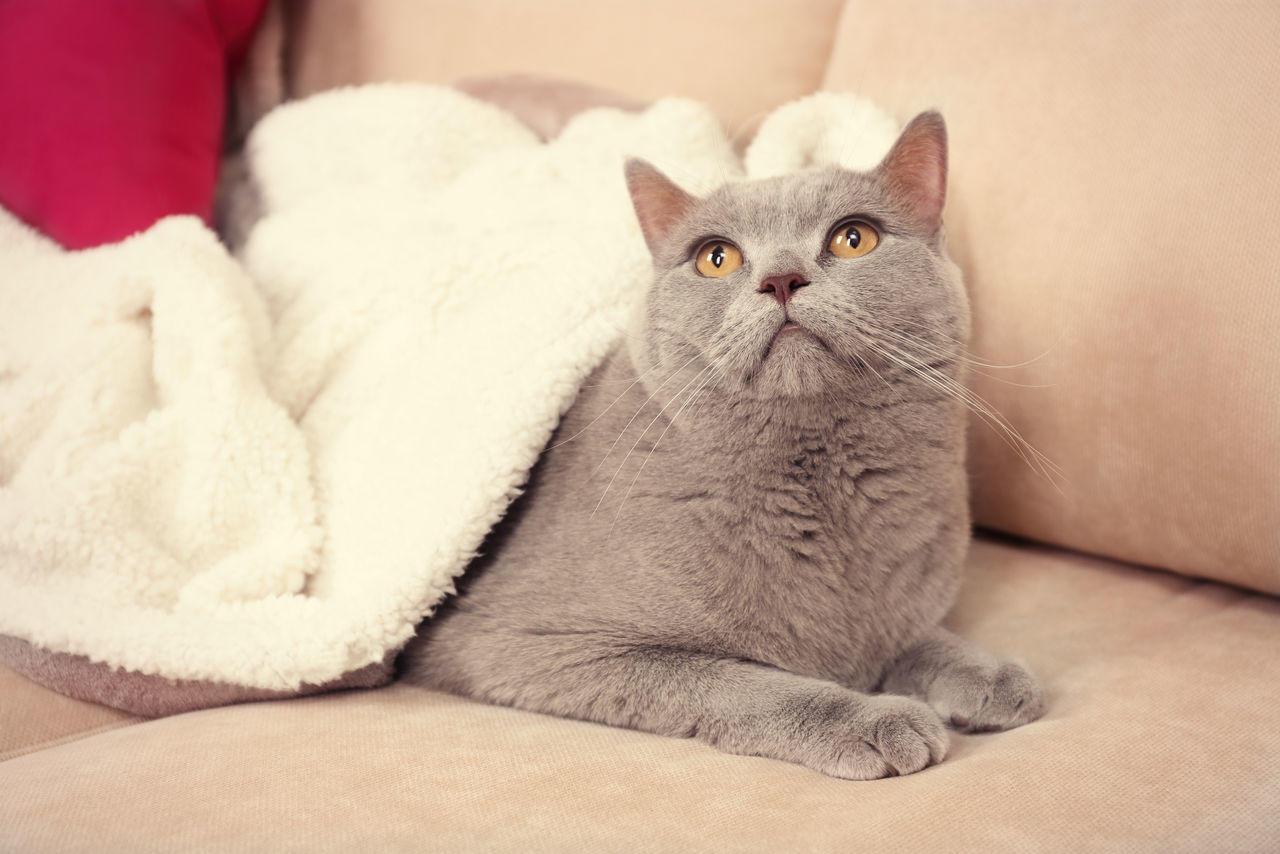 Коты болеют туберкулезом редко