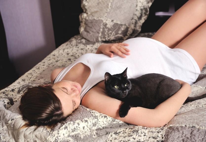 Беременные должны избегать ухода за котами