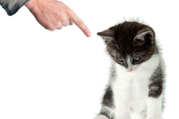 Кот наказан