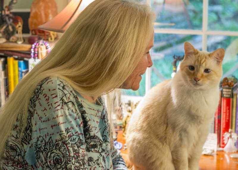 Кошки с людьми