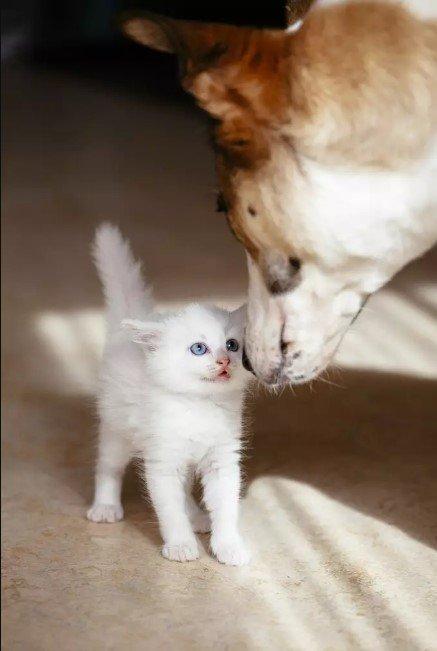 Щенок и кошка