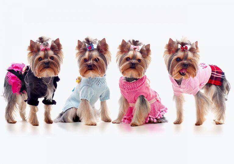 Картинки красивых собак в одежде, днем рождения коллеге