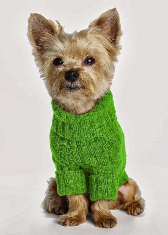 одежда собачья