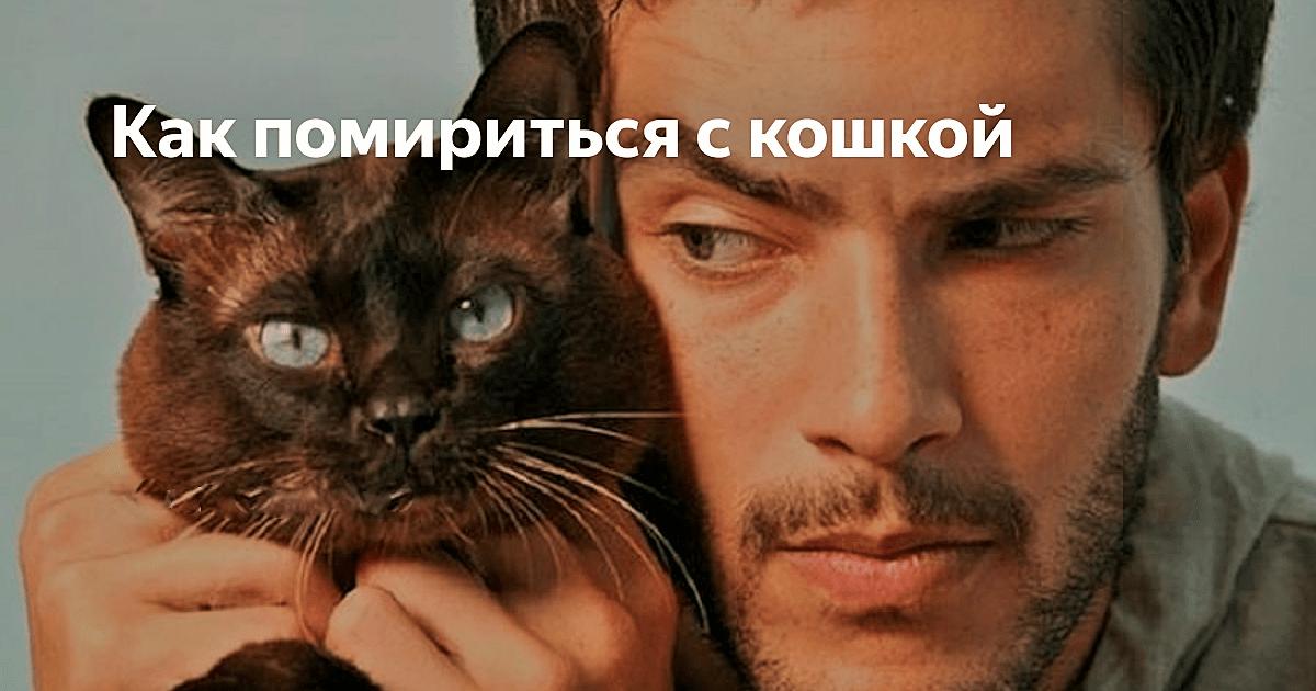 Как помиориться с кошкой