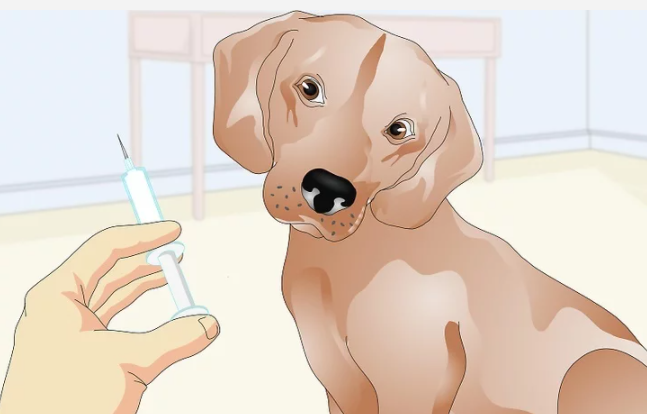 Как делать уколы собакам