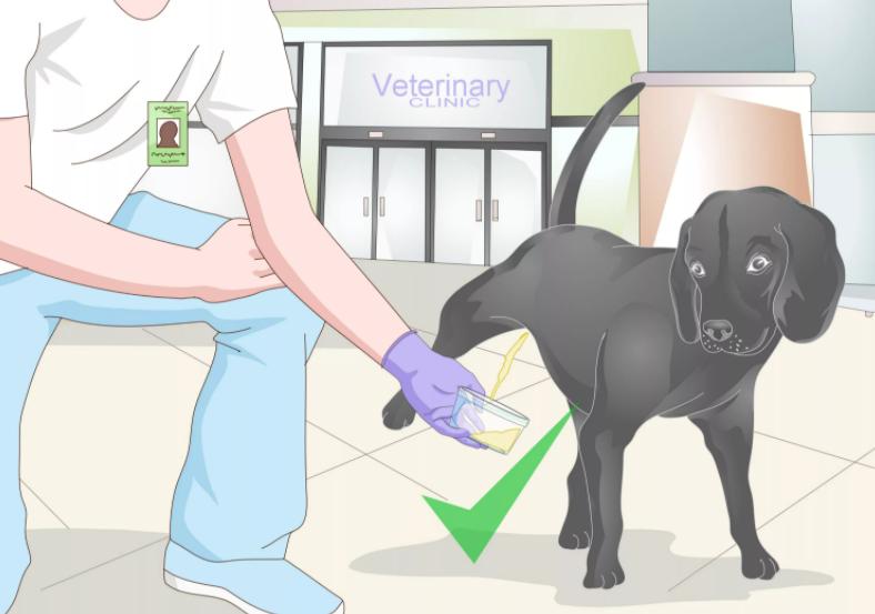 Виды цистита у собак