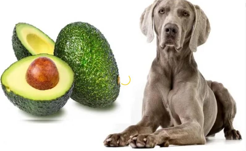 Авокадо собакам