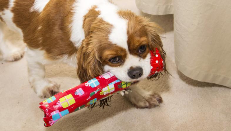 конфеты собакам