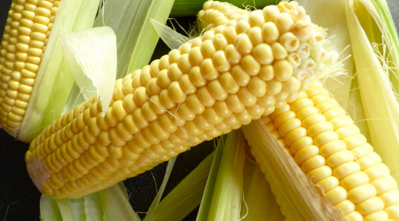 кукуруза в початках собакам